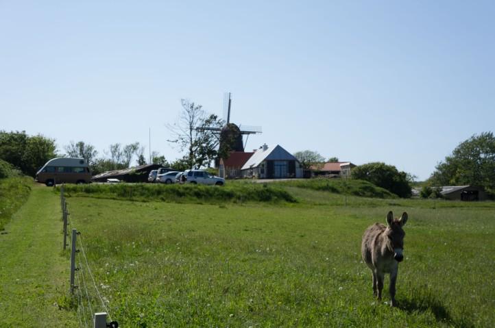 Skandinavien_2015-245