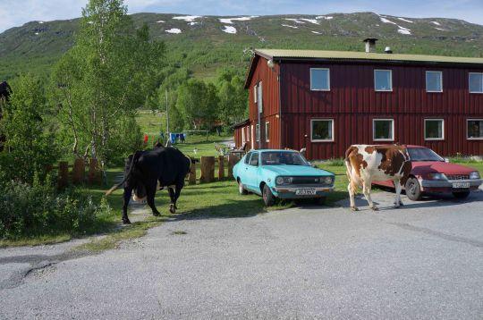 Skandinavien_2015-1204