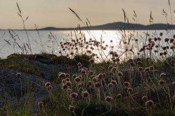 Skandinavien_2015-1398